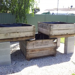build-aquaponics-system-6